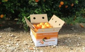 regalar-comprar-naranjas-online-por-navidad-caja-naranjas-ribera-del-jucar